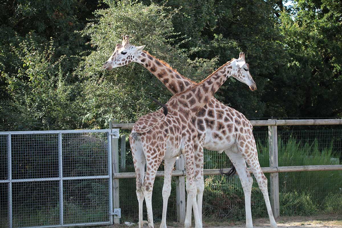 zoo-mervent