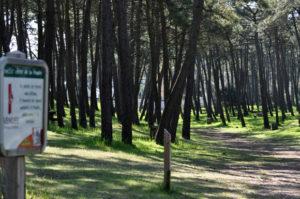 pistes de randonnées dans la foret
